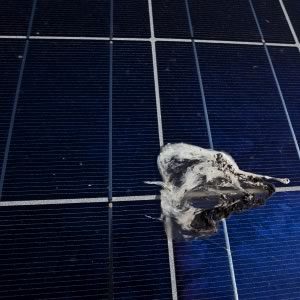 Bird droppings soil solar module